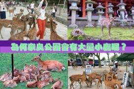 【日本趣談】為甚麽奈良公園會有這麽多鹿呢?
